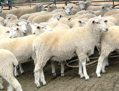 Air Quality and Your Health: Intensive Livestock Farming