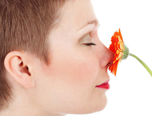How to Smell the Roses: The Human Olfactory System
